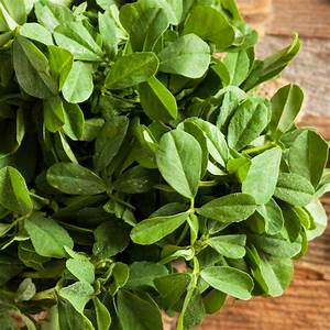 Fenugreek Leaves – SOS Chefs