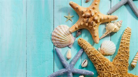 Seashells Wallpaper Collection  Most Beautiful Places In
