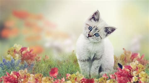 The Best Backgrounds Ever Cat Wallpaper Flower Best Wallpaper Download