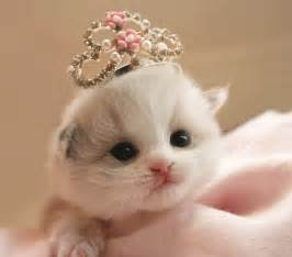 princess cat cat princess