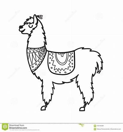 Vector Llama Lama Outline Cartoon Peru Drawn