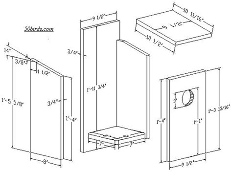 nestbox plans  dimensions  kestrel eastern screech
