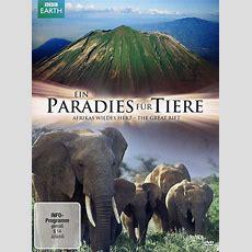 Ein Paradies Für Tiere  Afrikas Wildes Herz Dvd Oder Blu