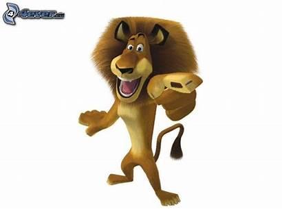 Madagascar Lion Cartoon