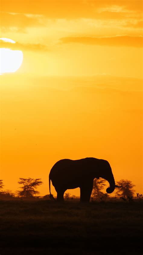 Wallpaper Iphone 8 Elephant by Elephant Iphone Wallpaper 74 Images