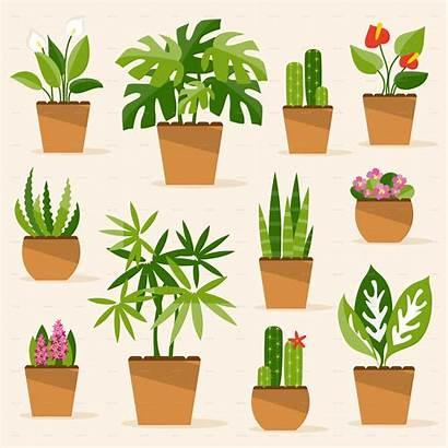 Houseplants Pot Flower Illustrations Clip Zimmerpflanzen Plant