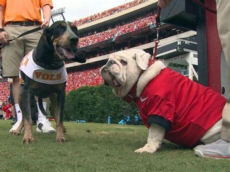 Ut Grad Breeds 'tennessee Bulldogs