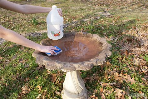 follow these tips on how to clean your birdbath backyard