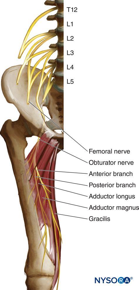 Obturator Nerve Block - Landmarks and nerve stimulator