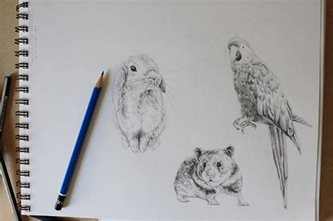 draw bunnies birds  hamsters
