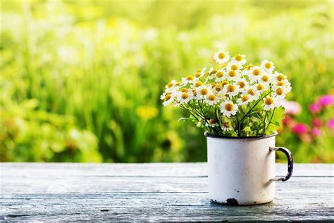 Pavasaris: generalinė tvarka sodo sklype