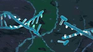 How Scientists Are Trying To Keep Genetic Engineering From