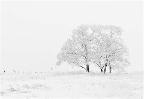 Free Images Tree Nature Branch Snow Black And White