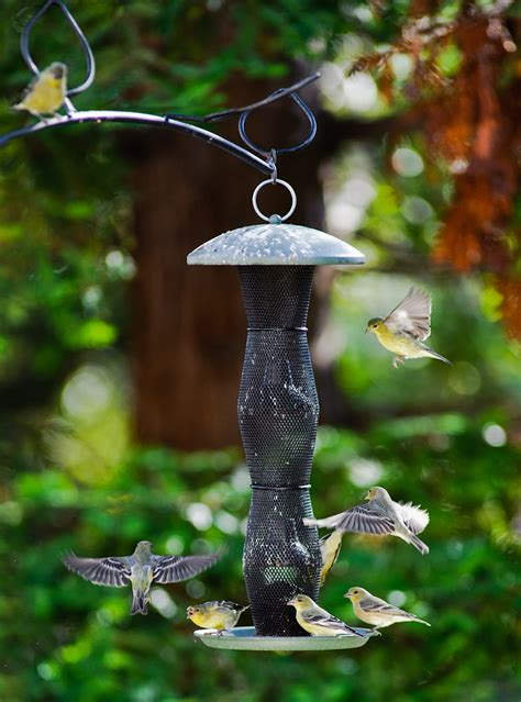 bird feeders for small birds only for songbirds