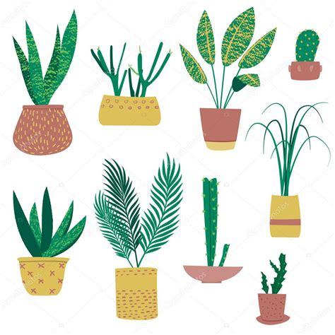 plantes exotiques en pots image vectorielle ammashams