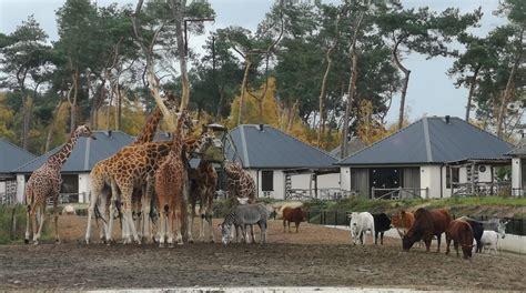 review safari resort beekse bergen ervaringen en tips