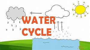 Water Cycle Facts For Kids