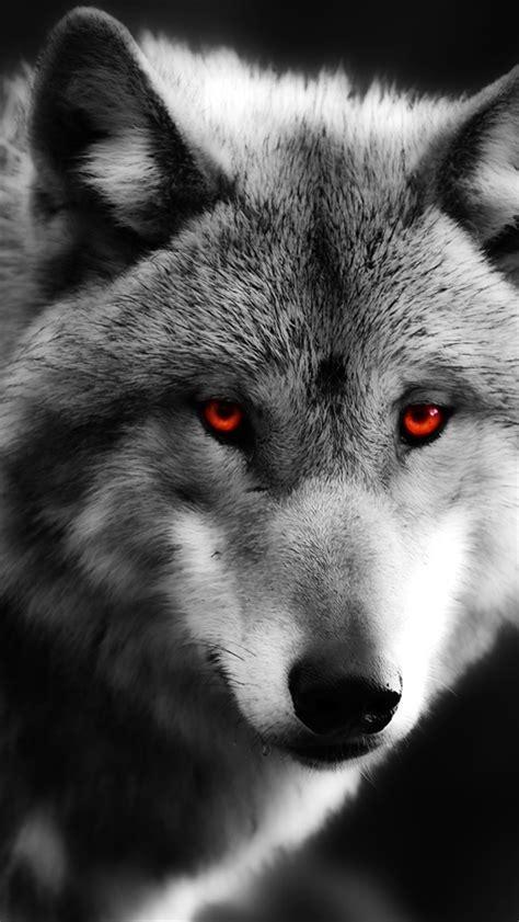 papeis de parede lobo close  olhos vermelhos predador