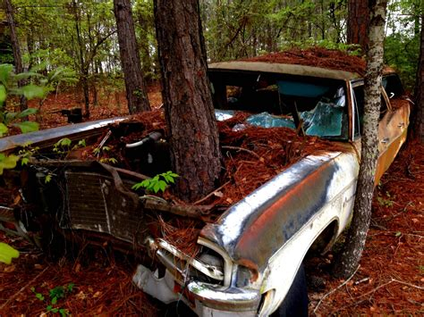car  tree growing   hood  alabama