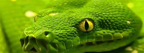facebook cover   top desktop snake wallpapers hd