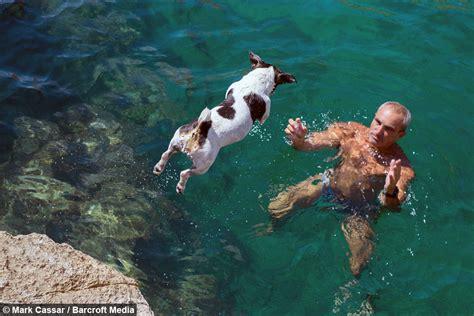 diving dog pet jack russell titti jumps  rocks