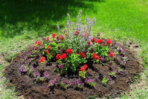 flower beds flower bed pictures beautiful flowers