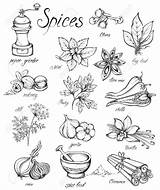 Spices Drawing Vector Kitchen Herbs Getdrawings Hand Illustration sketch template