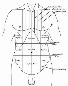 Where Is The Epigastric Region Of The Body