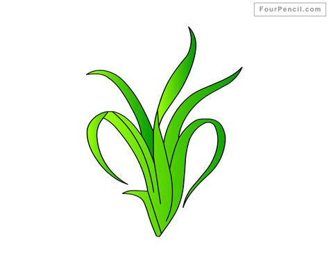 Seaweed Clipart Seaweed Drawing Clipart Best