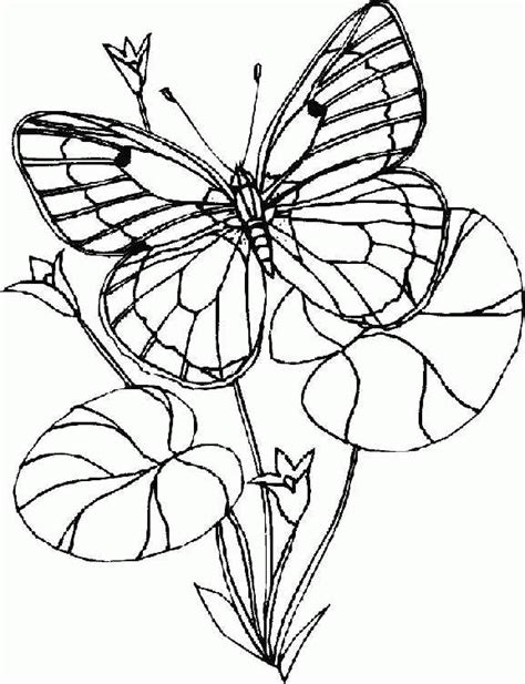 Coloring Images Of Butterflies by N 56 Coloring Pages Of Butterflies
