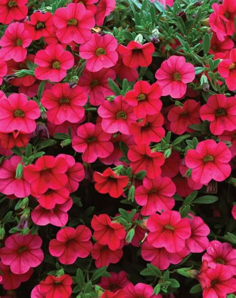 best flowers to plant in 5 best flowers to plant in spring kind of viral