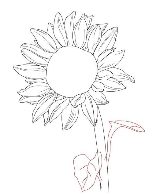 sunflower drawing template  getdrawings