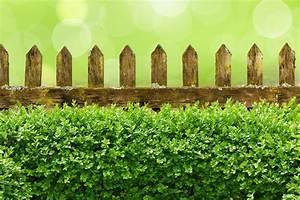 Langsam Wachsende Hecke : sichtschutz im garten zaun oder hecke ~ Michelbontemps.com Haus und Dekorationen