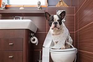 housetraining an adult dog potty training for the With the dog house training