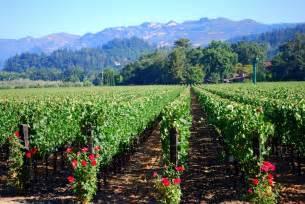 Beringer Napa Valley Vineyards