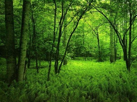 Free Green Forest Background by My Free Wallpapers Nature Wallpaper Green Forest