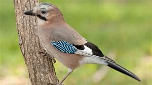 Was Ist Das Für Ein Baum : quiz was ist das f r ein vogel ~ Buech-reservation.com Haus und Dekorationen