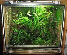 Pflanzen Terrarium Einrichten : terrarium wikipedia ~ Orissabook.com Haus und Dekorationen