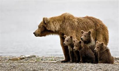 Grizzly Defenders Cascades Cubs Jim Wild Grizzlies