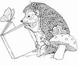 Coloring Hedgehog Hedgehogs Colouring Adult Coloringpages1001 sketch template