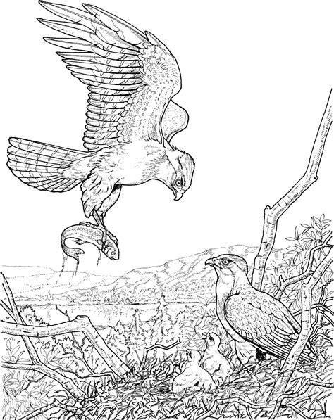 Coloring Eagle by Free Eagle Coloring Pages