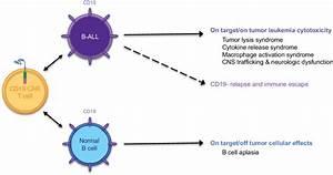 Binding Of Cd19 Car T Cells To Cd19