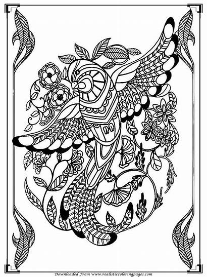Coloring Pages Birds Printable Bird Adult Adults