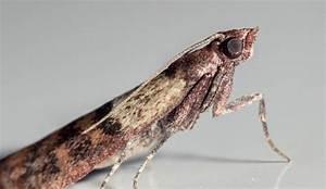 Manger Des Mites Alimentaires : les 25 meilleures id es de la cat gorie larve de mite sur ~ Mglfilm.com Idées de Décoration