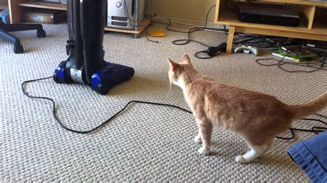 Cat Scared By Vacuum Youtube