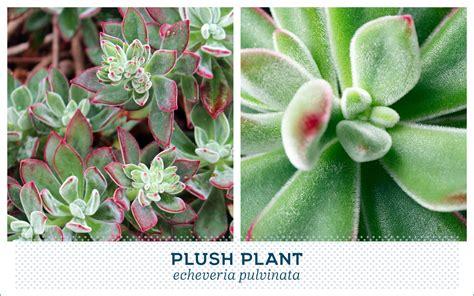 popular succulent plants 20 popular types of succulents ftd com