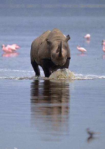 Wild Animals Google Rhino Plus Wildlife Country
