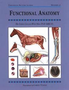 My Blog  T U00e9l U00e9charger Livres  U2666 Functional Anatomy