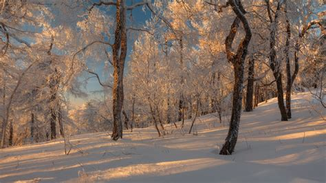 russian winter forest   fairy tale russia travel blog