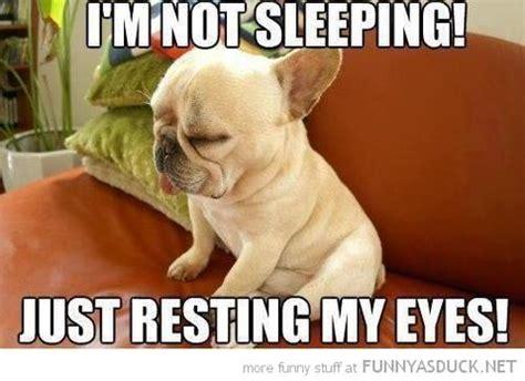 dog meme monday funny dog meme bullwrinkles dog blog
